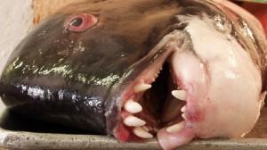 ugly fish head