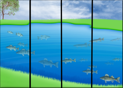 Lake with fish, divided into quarters
